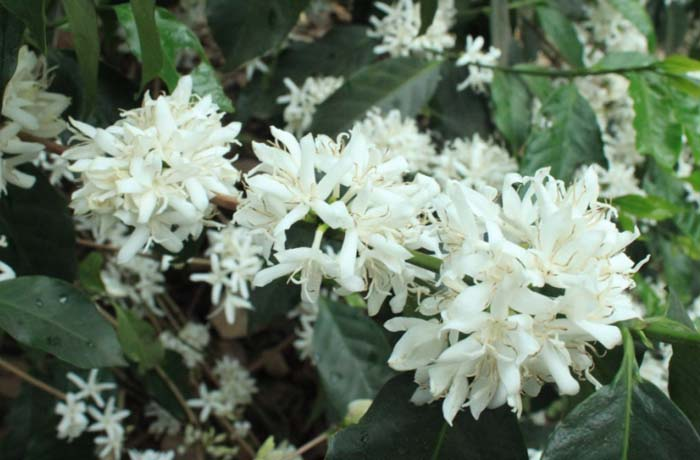 Flower from India