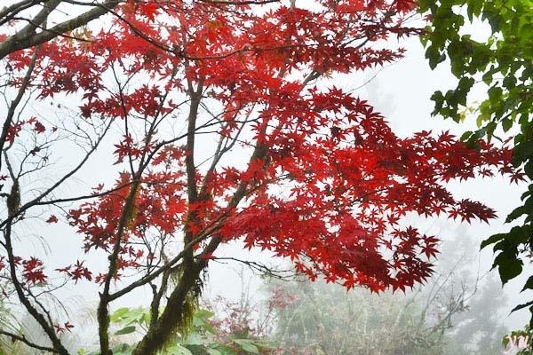 AutumnBlame