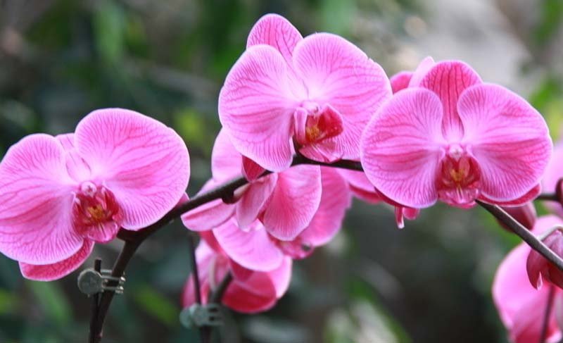 WithAnOrchid