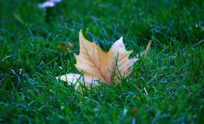 Autumn Blame 秋怨