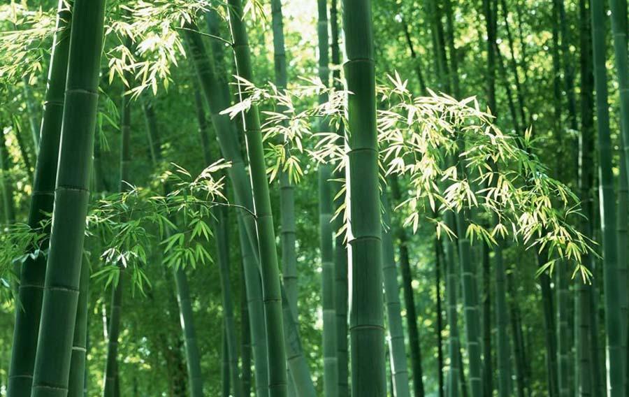 Bamboo Dance 竹舞